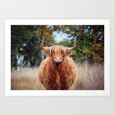 Scottisch Higlander Cow Art Print