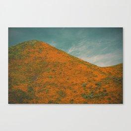 California Poppies 031 Canvas Print