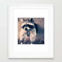 racoon Framed Art Prints featuring racoon by oslacrimale