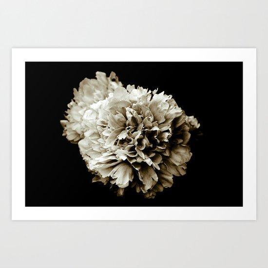 Peony Flower Portrait Art Print