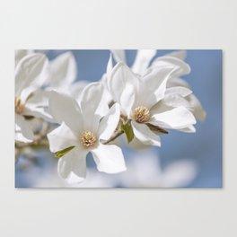 White Magnolia Canvas Print