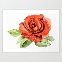 Red Rose In Bloom, Watercolour Sketch Art Print