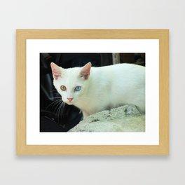 Blue And Green Eyed Cat Framed Art Print