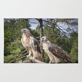 Pair of Red-tail Hawks in West Michigan Woodland Rug