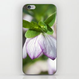 Lenten Rose iPhone Skin
