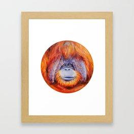 Chantek the Great Framed Art Print