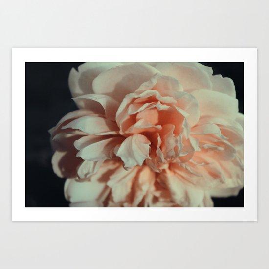 Wildeve Rose No. 1 Art Print