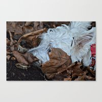 westie Canvas Prints featuring Hiding westie by  Alexia Miles photography