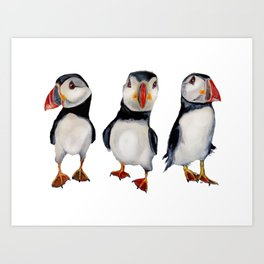 Puffins in september Art Print