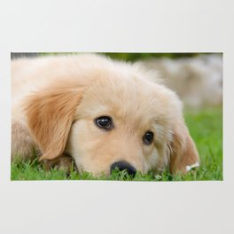 Golden Retriever puppy, cute dog Rug