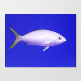 Yellow Tailed Snapper From Side Canvas Print