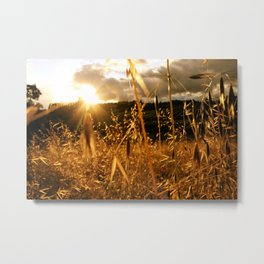Summer in Napa Valley Metal Print