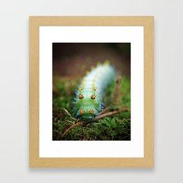 Green and Orange Cercropia Caterpillar Framed Art Print