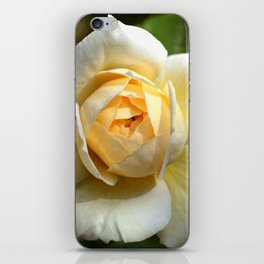 Simply the rose... iPhone Skin