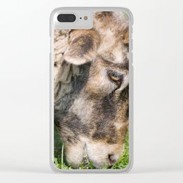 Single adult sheep eating grass Clear iPhone Case