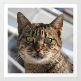 Beautiful Eyed Tabby Cat  Art Print