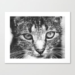 Tabby Cat Pencil Drawing Canvas Print