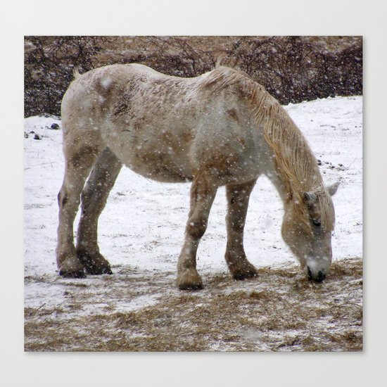 Workhorse Canvas Print