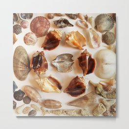 Conch Ring with Wing Oysters Metal Print