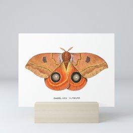 Randa's Eyed Silkmoth (Automeris randa) Mini Art Print