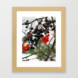 Winter Berries. Framed Art Print