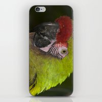 military iPhone & iPod Skins featuring Military Macaw by Maureen Bates Photography