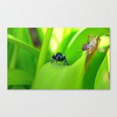Spider Stare Canvas Print