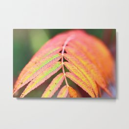 Sumac leaf colors in autumn Metal Print