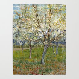 Orchard with Blossoming Apricot Trees by Vincent van Gogh Poster