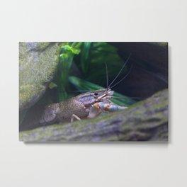 The crayfish Metal Print