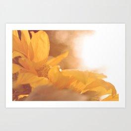 Sun Flare Sunflower Art Print