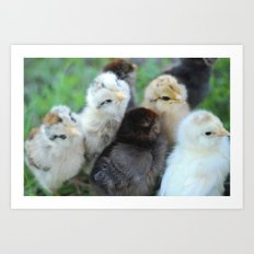 Baby Chicks  Art Print
