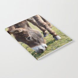 New Forest donkey Notebook