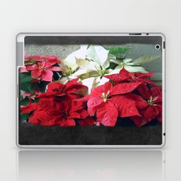 Mixed color Poinsettias 3 Blank P4F0 Laptop & iPad Skin