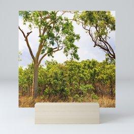 Eucalyptus trees in the bush Mini Art Print