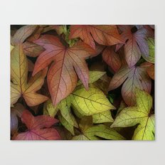 leaves at rest Canvas Print