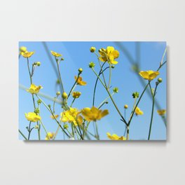 Field of Buttercups Metal Print