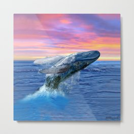 Breaching Humpback Whale at Sunset Metal Print