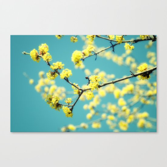 Yellow Spring blossoms Canvas Print