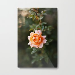 Pretty Pink Flower Metal Print