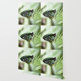 Birdwing Butterfly Wallpaper