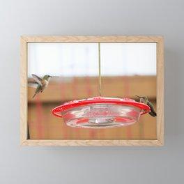 Twin Humming Birds Framed Mini Art Print
