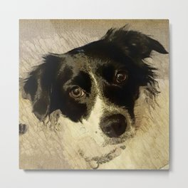Zoey the Border Collie Metal Print