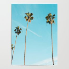 Palm Tree Sunshine Poster