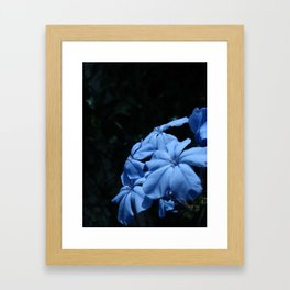 Flowers #14 Framed Art Print