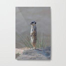 Meerkat Metal Print