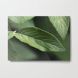 Sage Leaf Metal Print