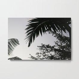 Florida Palms Metal Print