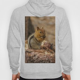 The Squirrel and the Redwood Hoody