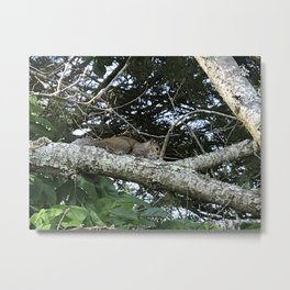 A Nap Up In the Sunshine - A Squirrels perch Metal Print
